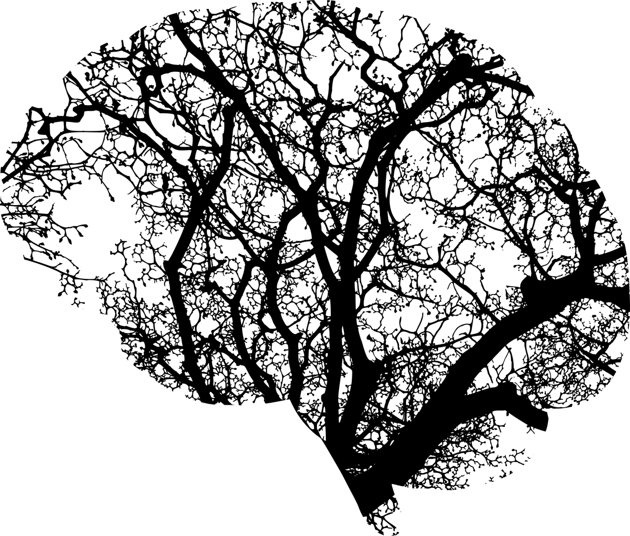 Soumaya M.